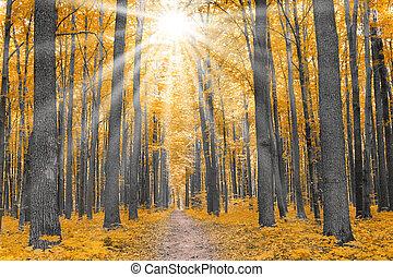 nature., erdő, alatt, ősz
