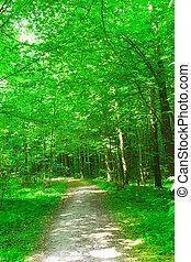 nature., erdő, alatt, nyár