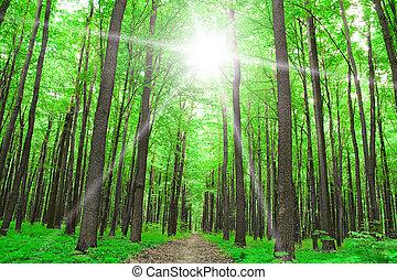 nature., erdő