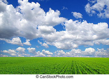 nature - field on a background of the blue sky