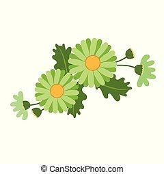 Nature flower green daisy