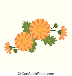 Nature flower orange daisy