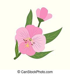 Nature flower pink evening primrose, vector botanic garden floral leaf plant.