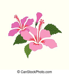 Nature flower pink hibiscus