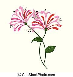 Nature flower pink honeysuckle, vector botanic garden floral leaf plant.