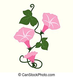 Nature flower pink morning glory flower, vector botanic...
