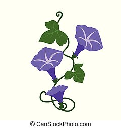 Nature flower purple morning glory flower, vector botanic...