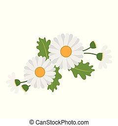 Nature flower white daisy