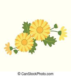Nature flower yellow daisy