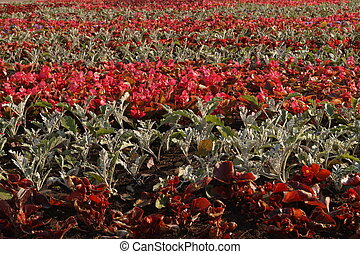 Nature flowerbed texture background