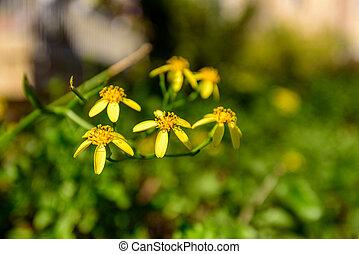 nature, fond, printemps, beau, ensoleillé, bleu, fleur, fleur jaune