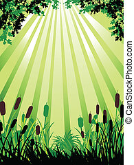 nature forest background