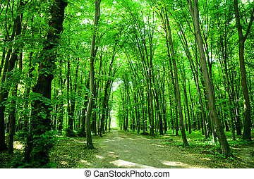 Nature. Forest