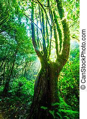 nature, grand, Arbres, vert, lumière soleil, forêt