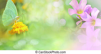Nature gree background banner Abstract blur summer bright with insect butterfly on yellow marigold and pink orchid