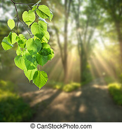 Nature green background with branch