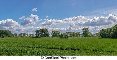 Nature green landscape. green field with lonely tree under the clouds