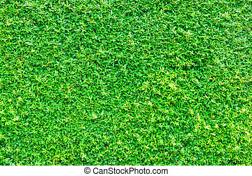 Nature green leaf background texture