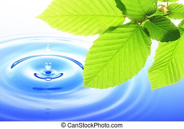 nature - green leaves and splashing water drop showing spa ...
