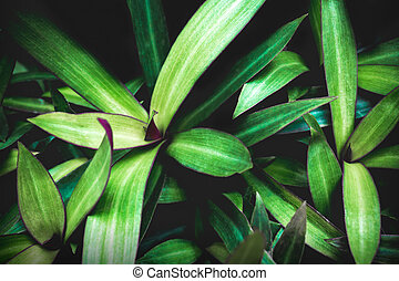Nature Green Leaves texture background