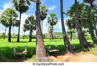 Nature green rice field and wooden swing hanging on palm trees with blue sky beautiful tropical background in the countryside /