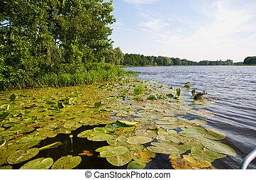 nature in lake