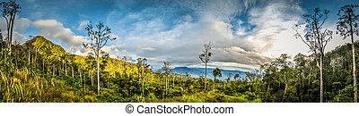 Nature in Sara village - Panoramic photo of trees and ...