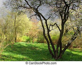 spring - nature in spring