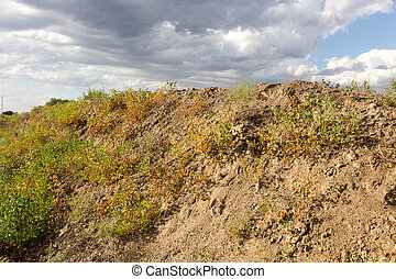 nature in the steppe