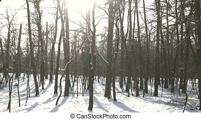 Nature in winter, day. Trees, snow and sunlight.