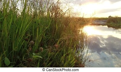 Nature lake river and grass sunset sunlight. The dog washes in the water steadicam shot motion video