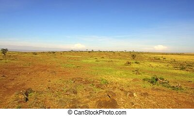 nature, landscape, safari, environment and wildlife concept - maasai mara national reserve savanna at africa