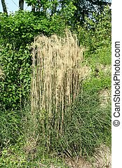 nature landscape with dry grass. Outdoor \