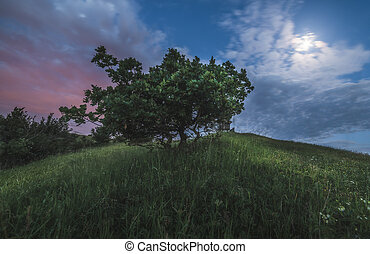 Trees on the Hill at Night