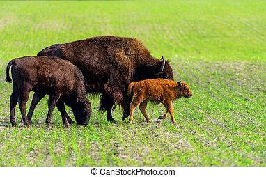 nature, mammal, animal, llama, wild, lama, wildlife, background, brown, green, landscape, standing, outdoor, portrait, zoo, grass, looking, pet, white, wool, alpaca, view, mountain, america, peru, travel, one, funny, hair, head