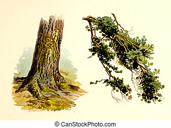 Nature of America. Old image