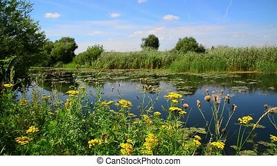 Nature of central part of Russia in summer. Front focus -...
