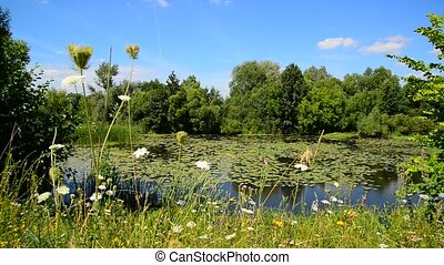 Nature of central part of Russia in summer. Front focus