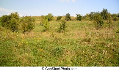 Nature of central Russia in August - Nature of a central...