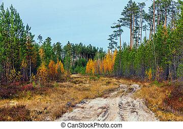 Nature of Siberia in the autumn