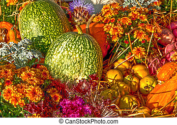 Nature on fall, pumpkins and dahlias - Orange and green...