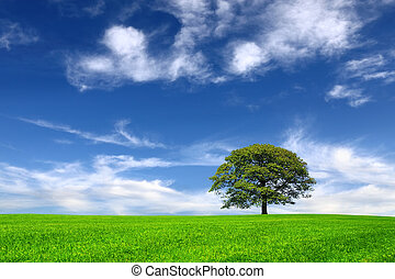 Nature on sky background