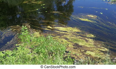 Nature on the River, Green Vegetation and algae on the Banks...