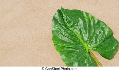 green tropical leaf on beach sand