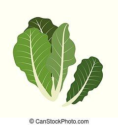 Nature organic vegetable Romaine lettuce, healthy vector...