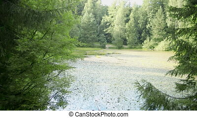 The nature of the pond overgrown with duckweed, the covered surface, the ecosystem of the reservoir