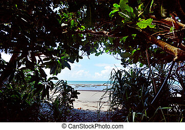 Nature passage to Cape Tribulation in Daintree National Park...