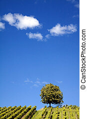Nature Photography: Summer Landscape