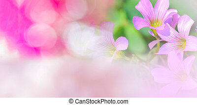 Nature pink background banner abstract pink and green blur bokeh background summer bright day