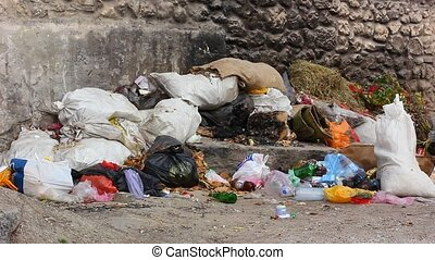Nature pollution with garbage